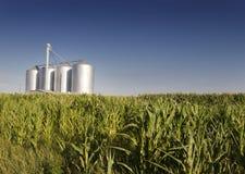 Campo de maíz con los silos agrícolas Fotos de archivo