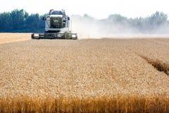 Campo de maíz con trigo en la cosecha Foto de archivo libre de regalías