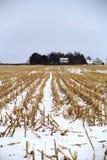 Campo de maíz congelado foto de archivo libre de regalías
