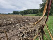 Campo de maíz cosechado fotos de archivo libres de regalías