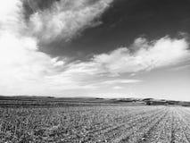 Campo de maíz cosechado foto de archivo libre de regalías