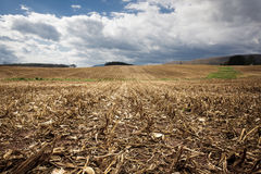 Campo de maíz cosechado Fotografía de archivo