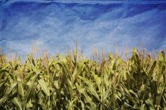 Campo de maíz de Grunge Foto de archivo libre de regalías