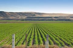 Campo de maíz de Idaho Foto de archivo
