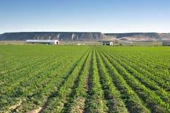 Campo de maíz de Idaho Fotos de archivo libres de regalías