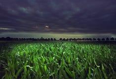 Campo de maíz de la noche fotografía de archivo libre de regalías