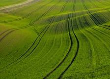 Campo de maíz de la primavera Fotografía de archivo libre de regalías