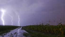 Campo de maíz de la tormenta del relámpago Imágenes de archivo libres de regalías
