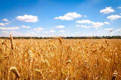 Campo de maíz de oro en Alemania Imagen de archivo