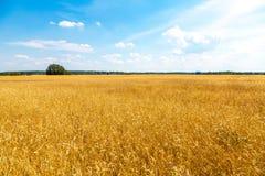 Campo de maíz de oro en Alemania Fotografía de archivo