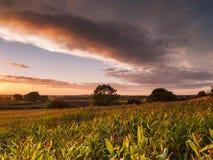 Campo de maíz de Shropshire en puesta del sol de oro Fotografía de archivo