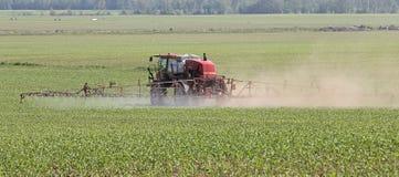 Campo de maíz del espray foto de archivo