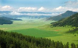 Campo de maíz del resorte en medio de las montañas Imagen de archivo
