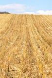 Campo de maíz después de la cosecha en otoño en el Moldavia fotos de archivo libres de regalías