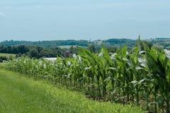 Campo de maíz en el país de Amish fotos de archivo libres de regalías