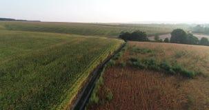 campo de maíz en el verano almacen de video