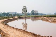 Campo de maíz en la estación seca, Tailandia Imagen de archivo