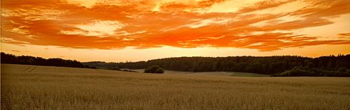 Campo de maíz en la puesta del sol Imagenes de archivo