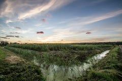 Campo de maíz en la puesta del sol Foto de archivo