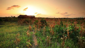 Campo de maíz en la puesta del sol cerca del pueblo en Kenia almacen de video