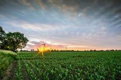 Campo de maíz en la salida del sol con los molinoes de viento Foto de archivo