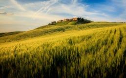 Campo de maíz en Toscana imagenes de archivo