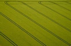 Campo de maíz, foto aérea Fotos de archivo libres de regalías