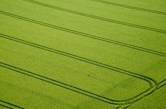 Campo de maíz, foto aérea Imágenes de archivo libres de regalías