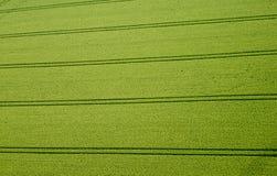 Campo de maíz, foto aérea Foto de archivo