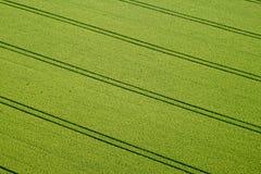 Campo de maíz, foto aérea Fotografía de archivo
