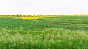 Campo de maíz de Iowa fotografía de archivo