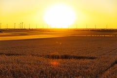 Campo de maíz de oro en la puesta del sol con las turbinas de viento en el fondo fotografía de archivo