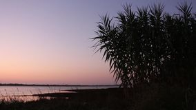 Campo de maíz que se sacude suavemente en el viento por la última tarde, con el río como fondo metrajes
