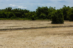 Campo de maíz seco Imagen de archivo