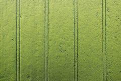 Campo de maíz verde Imágenes de archivo libres de regalías
