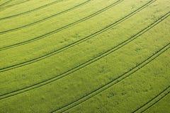Campo de maíz verde Fotografía de archivo
