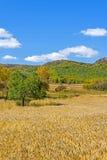 campo de maíz y bosque de la montaña en el otoño Fotografía de archivo libre de regalías