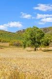 campo de maíz y bosque de la montaña en el otoño Foto de archivo libre de regalías