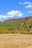 campo de maíz y bosque de la montaña en el otoño Imagenes de archivo