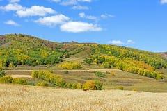 campo de maíz y bosque de la montaña en el otoño Imagen de archivo