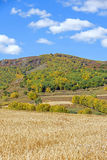 campo de maíz y bosque de la montaña en el otoño Fotografía de archivo