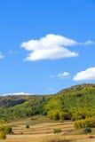 campo de maíz y bosque de la montaña en el otoño Imágenes de archivo libres de regalías