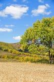 campo de maíz y bosque de la montaña en el otoño Foto de archivo