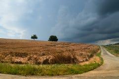 Campo de maíz y carril de la granja Fotos de archivo libres de regalías