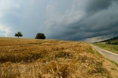 Campo de maíz y carril de la granja Foto de archivo