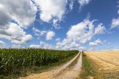 Campo de maíz y cielo azul Fotos de archivo libres de regalías