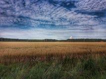 Campo de maíz y cielo hermoso Imagen de archivo libre de regalías