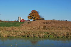 Campo de maíz y granero de la caída imagen de archivo