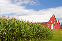 Campo de maíz y granero rojo Imágenes de archivo libres de regalías