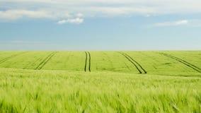 Campo de maíz y paisaje azul del cielo nublado Fotografía de archivo libre de regalías